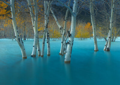 poplar trees in water that looks like glass due to slow shutter speed by dave brosha conference and chill outdoor adventure edition speaker