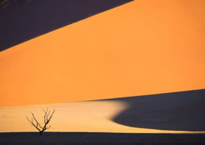 orange and tan contrasts with a dead tree silhouetted in the sun by dave brosha speaker at conference and chill outdoor adventure edition