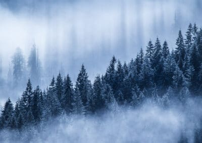 frosty pine trees obscured by mists in the canadian rockies by dave brosha outdoor photographer from canada