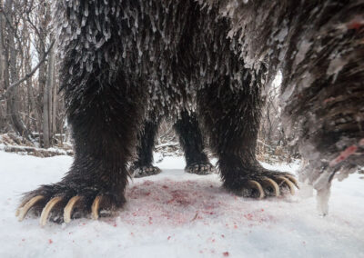 a camera trap catches part of the neck and four clawed feet of a grizzly as it devours its kill with frozen blood all around on the snow image by peter mather outdoor wildlife photographer and speaker at conference and chill